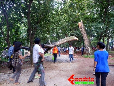 PohonTumbang di Ragunan